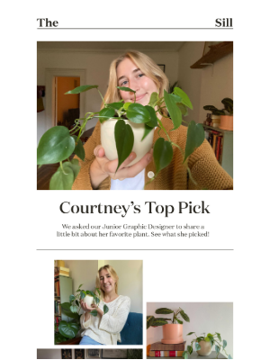 The Sill - Team pick: Courtney's FAVE plant🌱