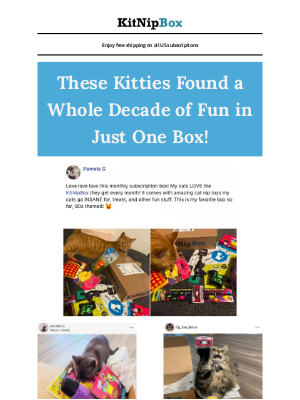 KitNipBox - What Will Your Kitty Find?😻