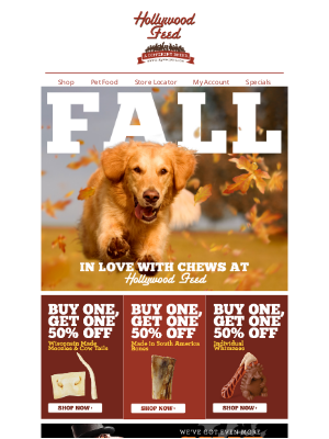 Hollywood Feed - Fall for These 🍁NEW🍁 Deals!