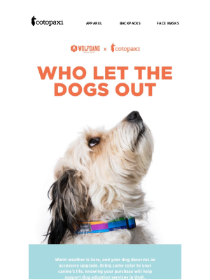 Cotopaxi - Your Dog Needs This Leash + Collar Duo