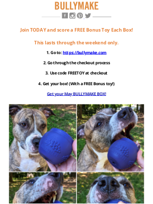 BULLYMAKE - FREE Bonus Toy Every Box!💯 Join BULLYMAKE Today