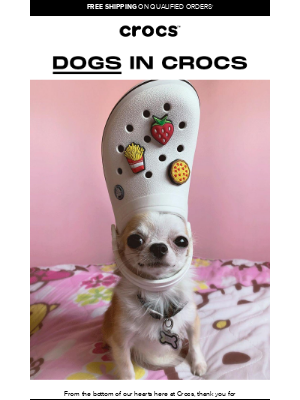 Crocs - Do you like dogs? Do you like Crocs?