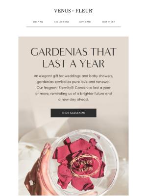 VenusETFleur - Real fragrant Eternity®️ Gardenias.
