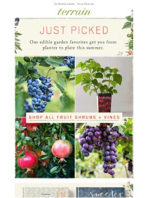 4 new edible garden ideas.