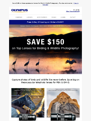 Olympus - Tips & Lens Deals for Bird or Wildlife Photography