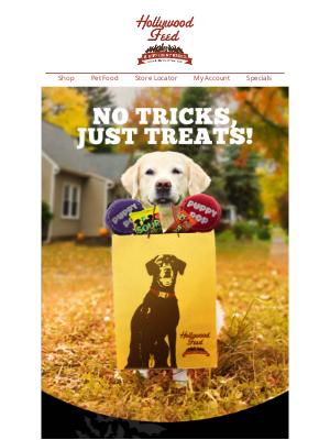 Get Your Pet in the HOWLoween Spirit!🎃