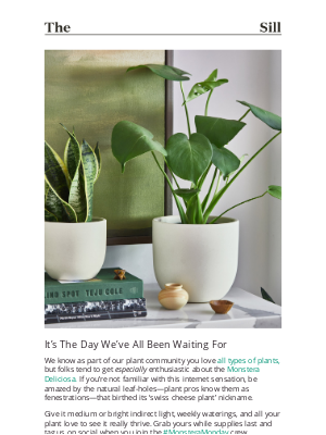 The Sill - Our Monstera is BACK IN STOCK!