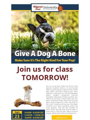 Hollywood Feed - Give A Dog A Bone 🐶 🦴