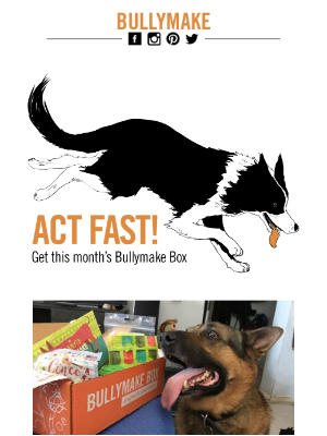 BULLYMAKE - Why wait? Get your Bullymake Box now!