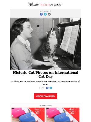 The Atlantic Photo - Historic Cat Photos on International Cat Day