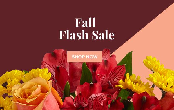 Fall Flash Sale - Shop Now
