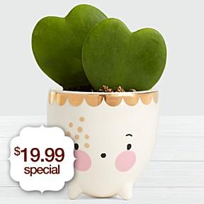 Whimsical Hoya Heart Friend